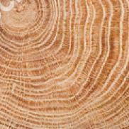 Montanna Oak
