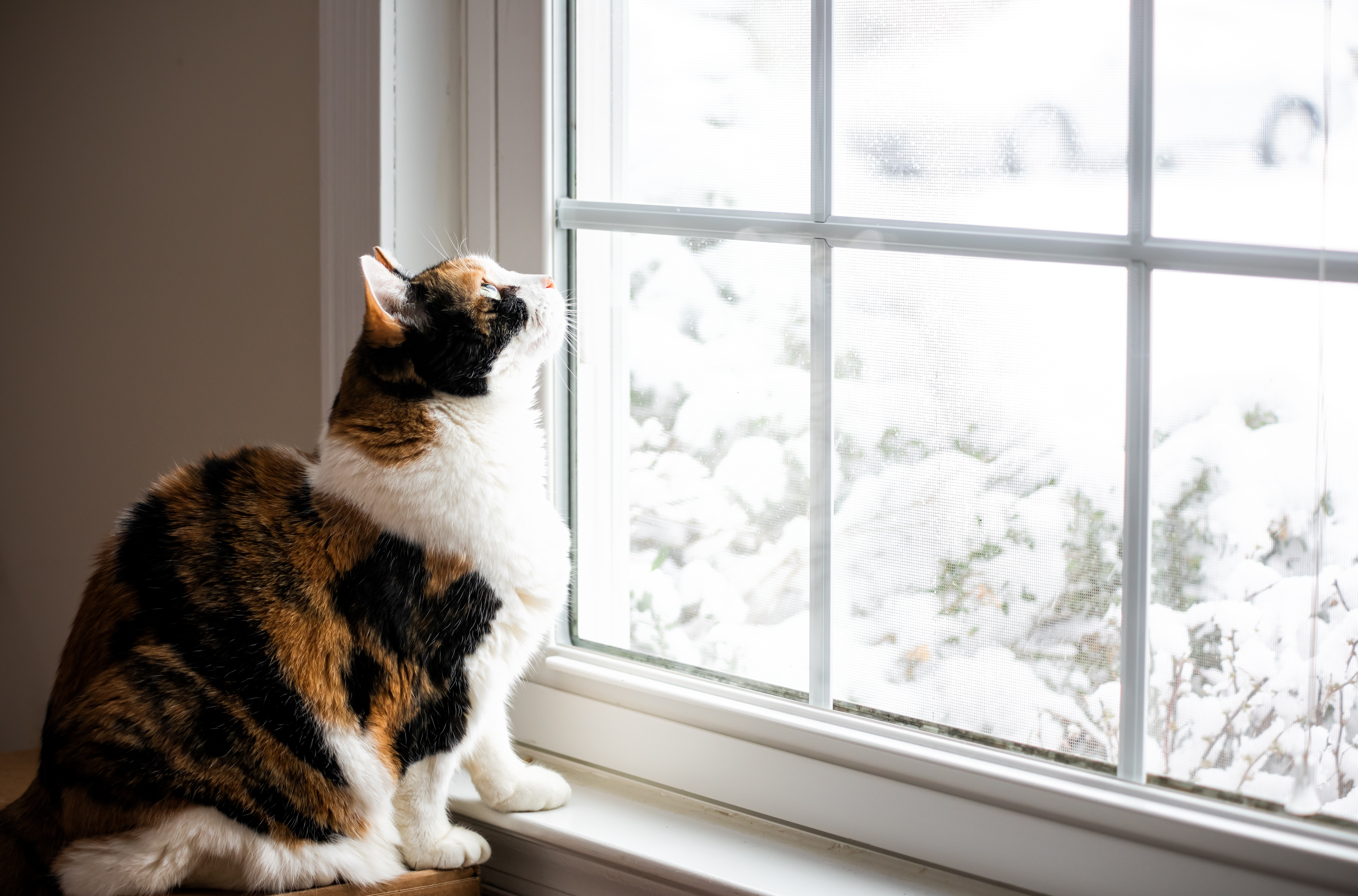 8 Ways to Tell if You Need Replacement Windows